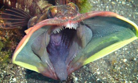 10 bizarných živočíšnych druhov, ktoré skutočne žijú na našej planéte