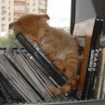 15 fotiek, ktoré dokazujú, že mačky sú schopné zaspať skutočne kdekoľvek :)