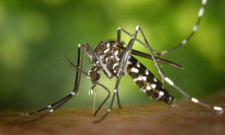 tiger-mosquito-49141_1280