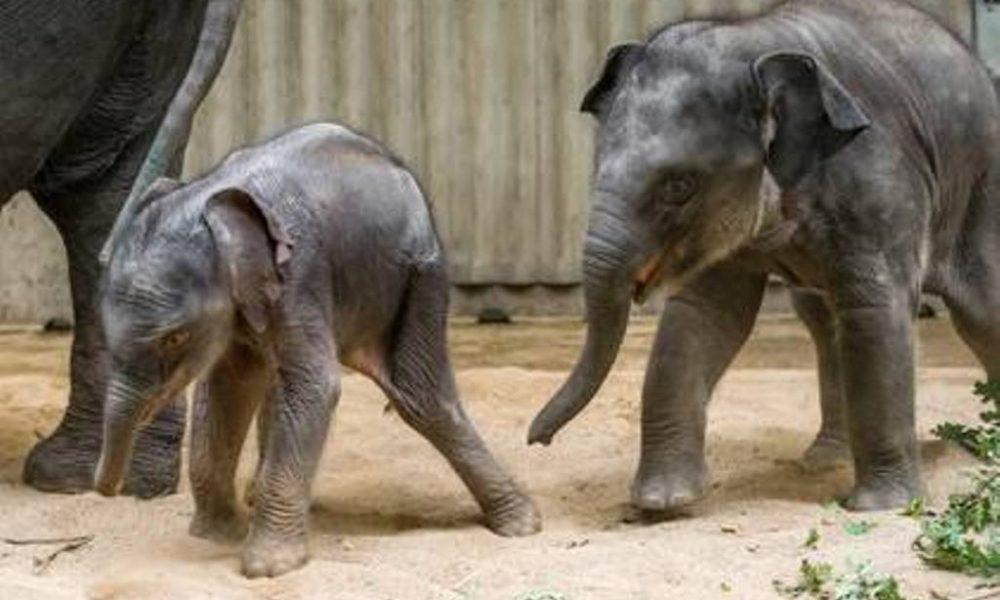 Foto:Facebook-Zoo Praha