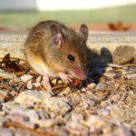 Geniálne a hlavne humánne pasce na myši, ktoré si môžeš jednoducho vyrobiť doma