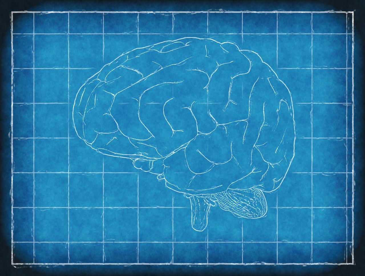 mozgu