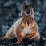 Ohromujúce portréty zvierat od ukrajinského fotografa