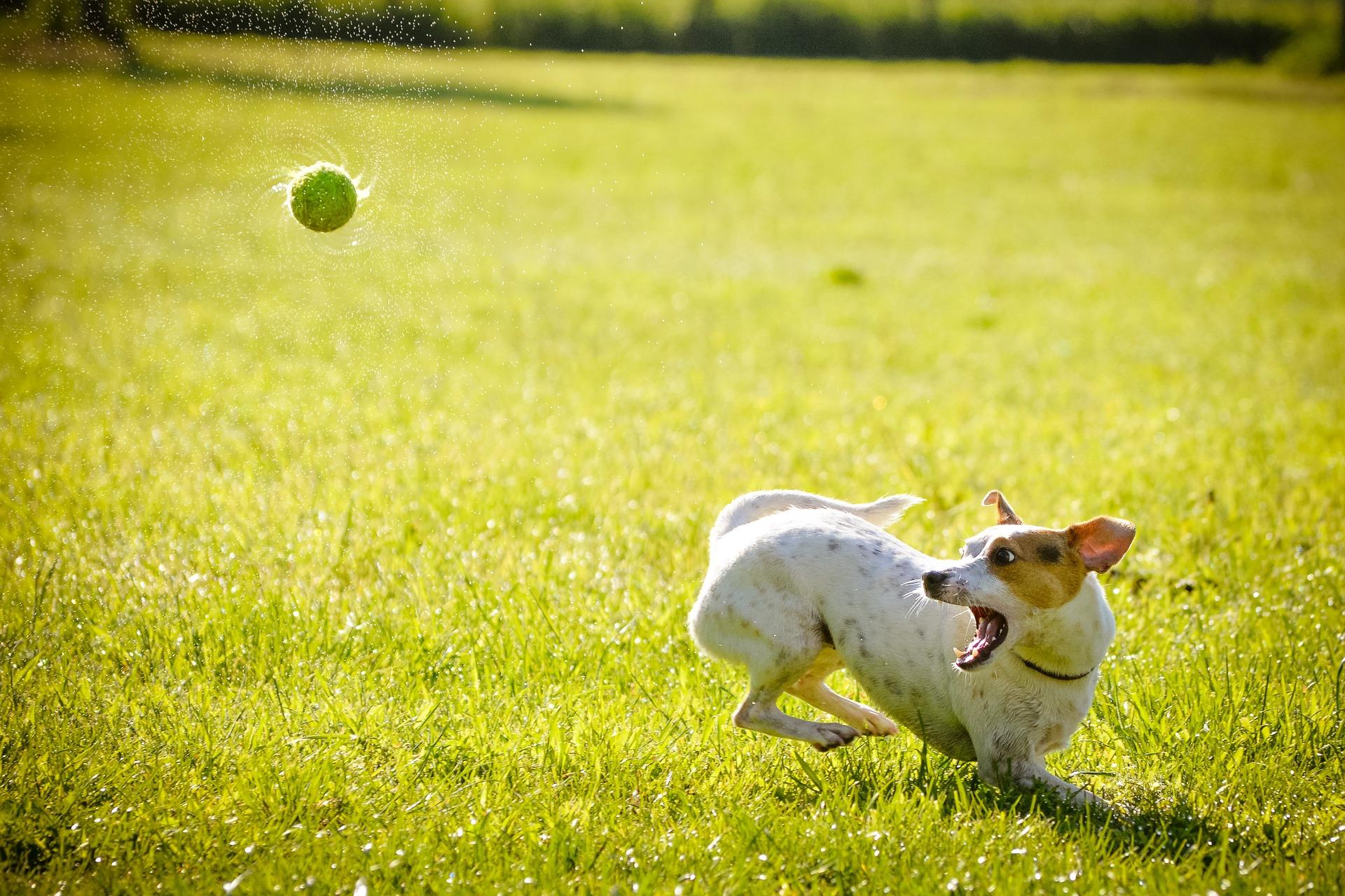 dog-1367297_1920 (1)