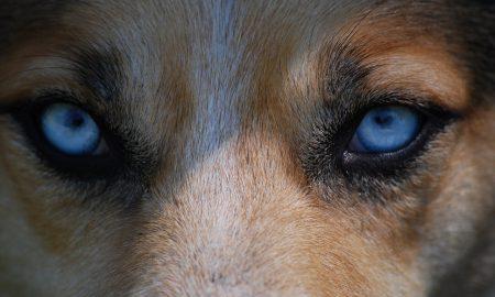 eyes-712125_1280