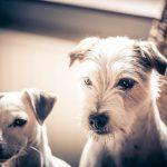 TOP 10 neuveriteľných vedeckých objavov o psoch, o ktorých si pravdepodobne netušil