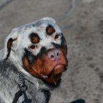 10 zvierat so vzácnou kožnou chorobou, vďaka ktorej vyzerajú neobyčajne