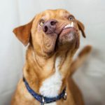 Zoznám sa s Picassom, dokonale nedokonalým psom, ktorého nik nechcel