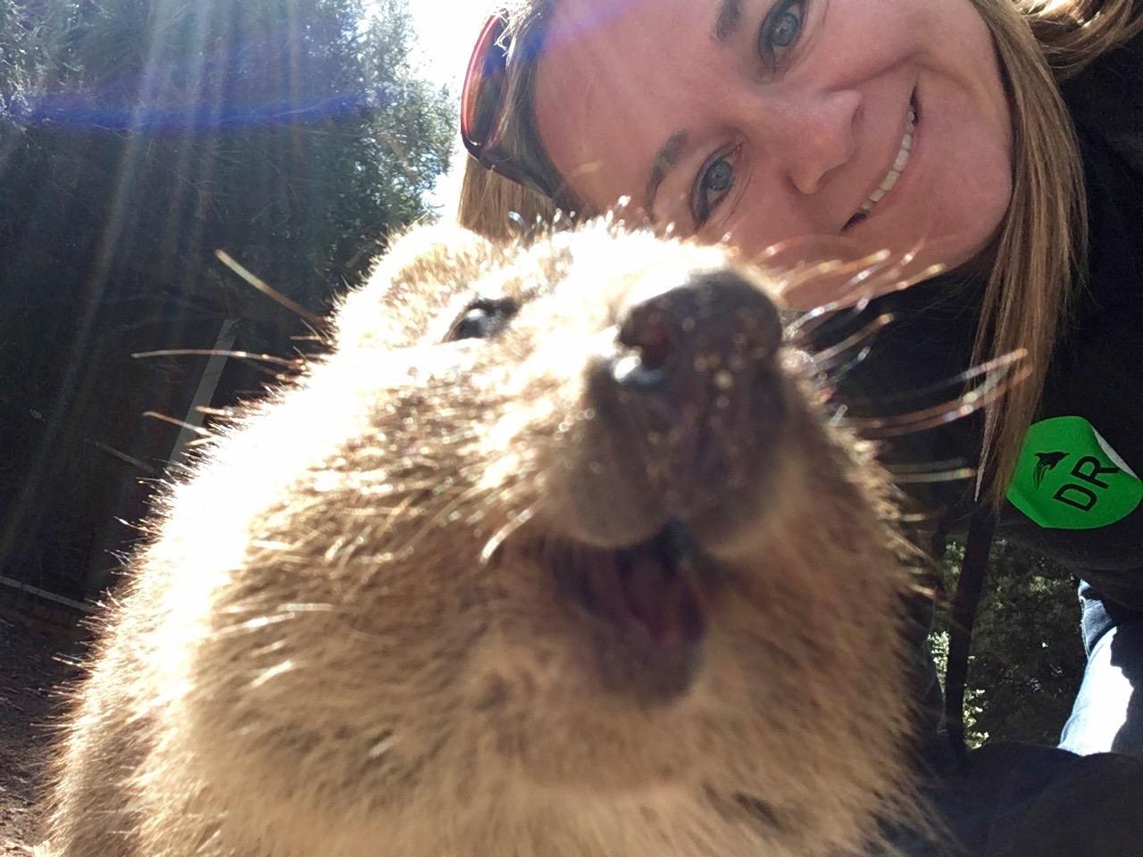 Quokka_selfie