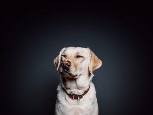 wall-animal-dog-pet