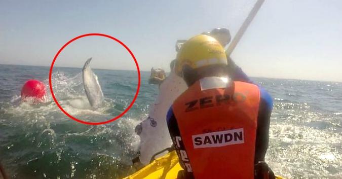 """Veľryba """"vyfackala"""" svojho záchrancu"""