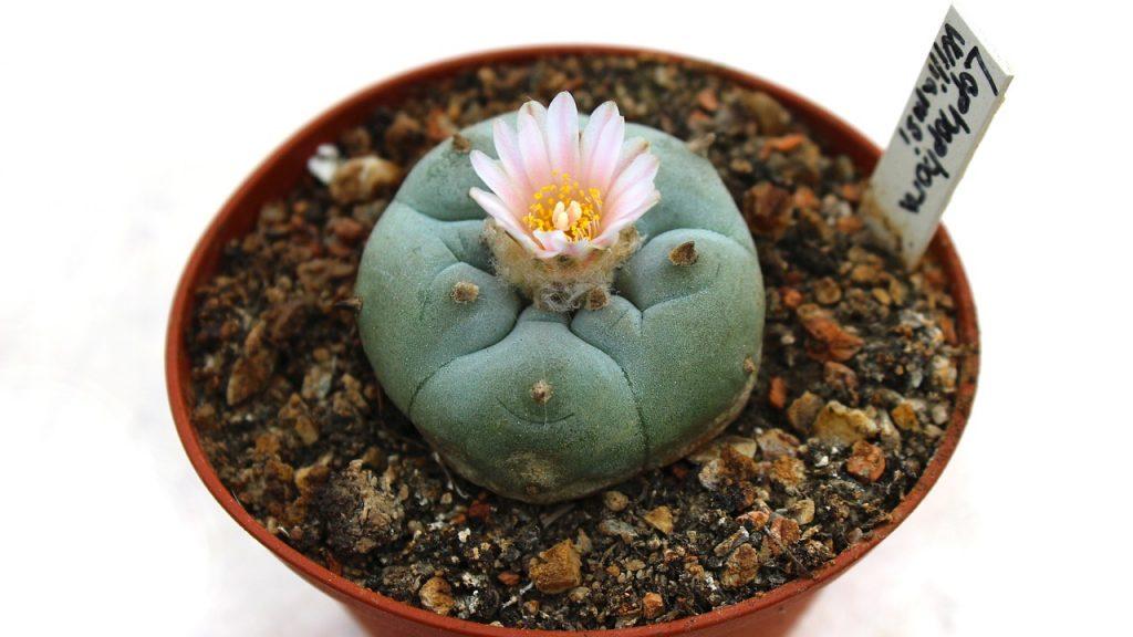 cactus-1397678_1280