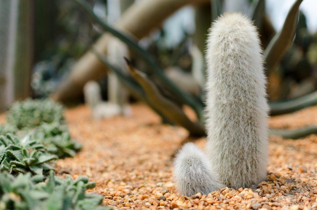 cactus-1587118_1280