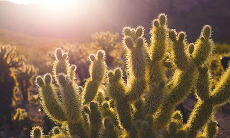 10 zaujímavých faktov o kaktusoch