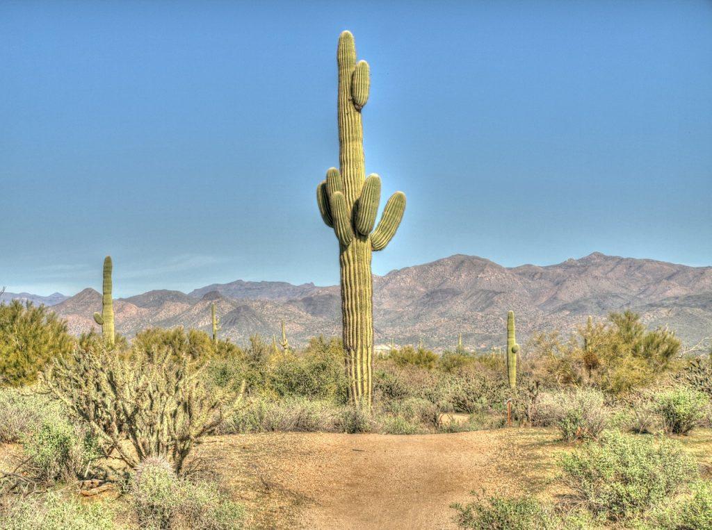 cactus-913532_1280