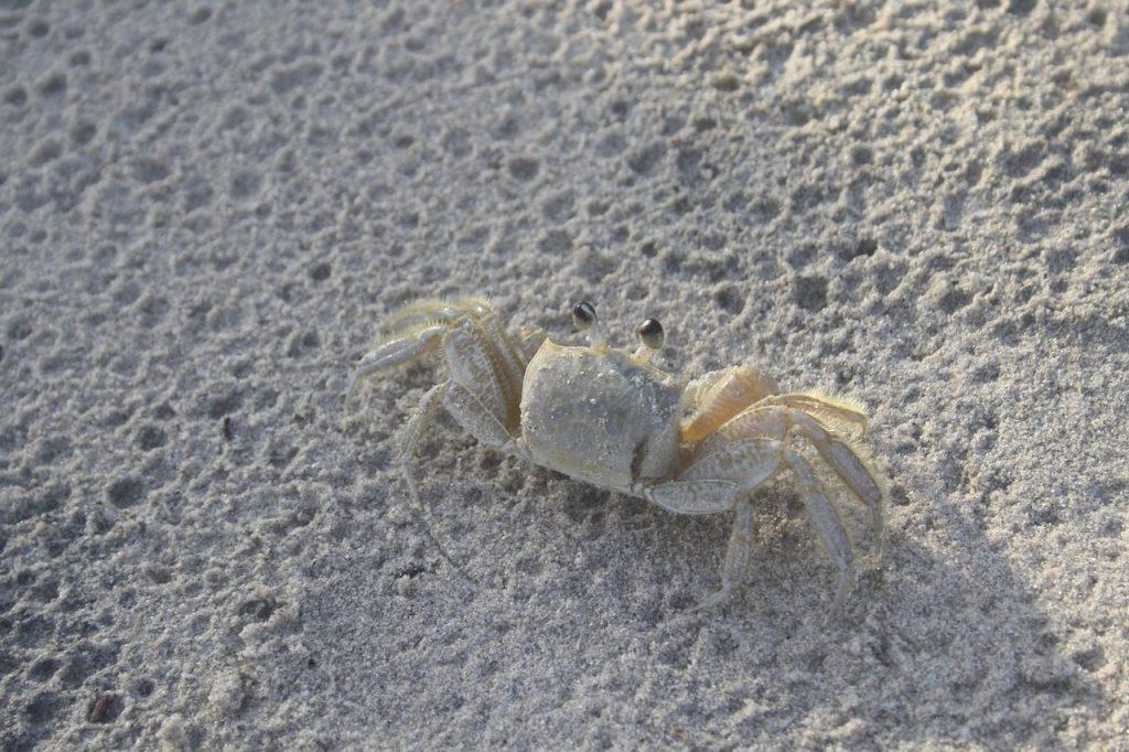crab-2259569_1280