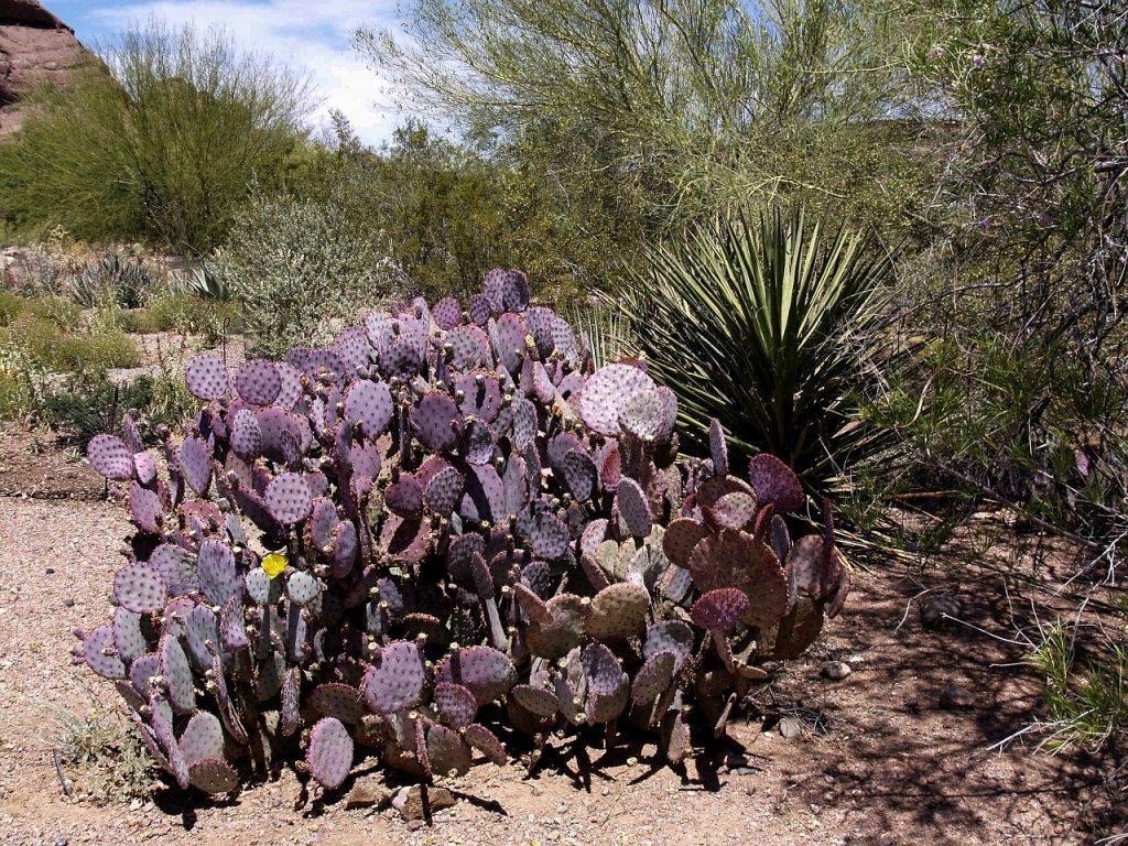 desert-190039_1280