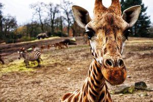 zaujímavostí zo zvieracej ríše