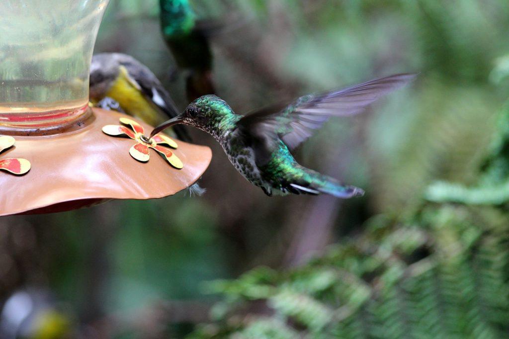 hummingbird-2007106_1280
