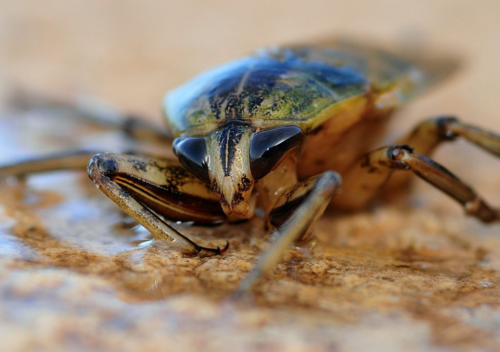 insect-622415_1280