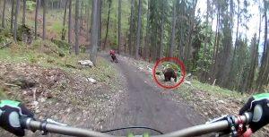 stretnutie s medveďom