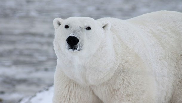 10 najväčších zvierat, ktoré žijú na svete