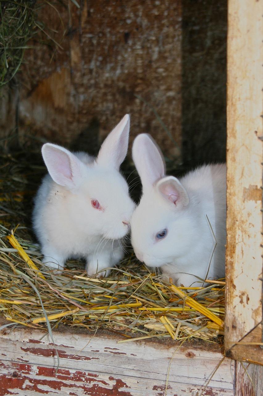 rabbit-1033645_1280