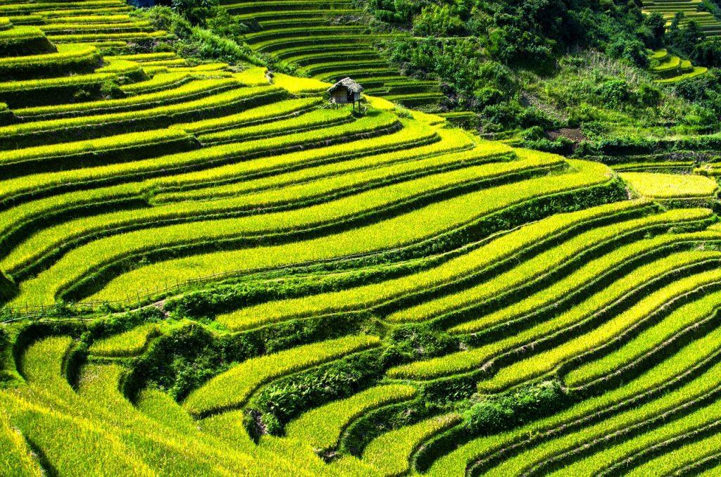 rice-terraces-164410_1280