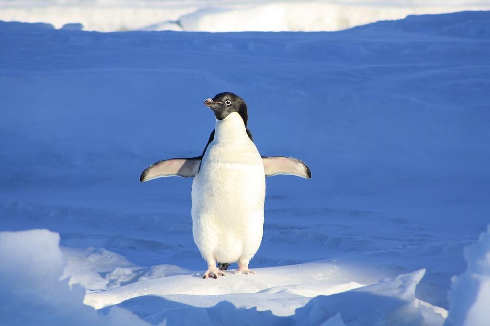 10 fascinujúcich faktov o zvieratách