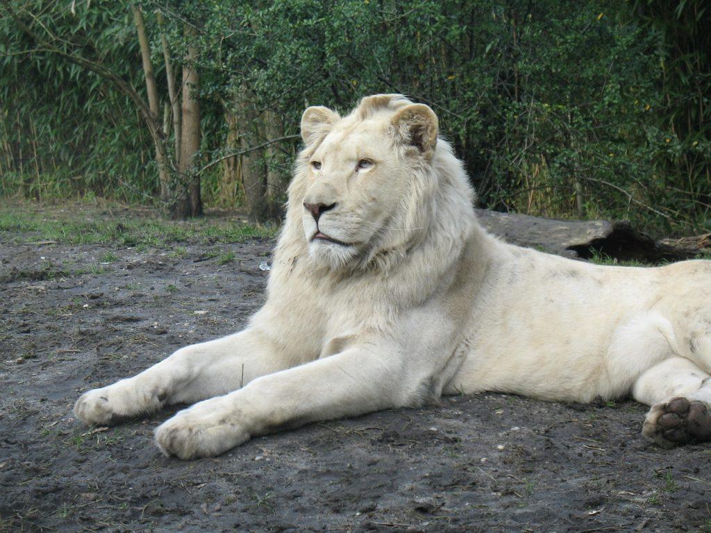 zoo-70669_1280