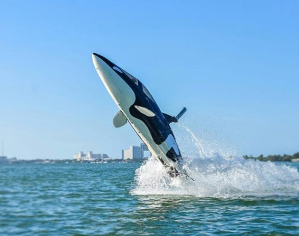 delfindubaj