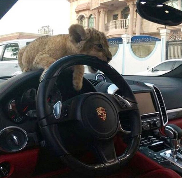 leopardauto