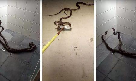 dva hady