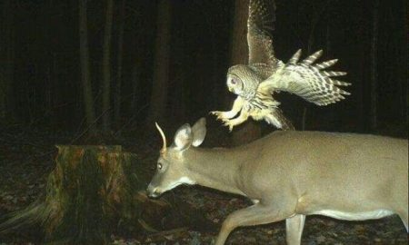 divoké zvieratá