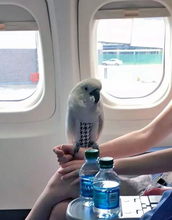 zvláštni cestujúci