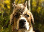 Zábavné fotografie zo spoločného cestovania psa a mačky