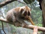 10 na prvý pohľad neškodných stvorení, ktoré môžu byť smrteľne nebezpečné
