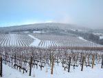 6 jedinečných vínnych oblastí, ktoré na Slovensku máme
