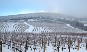 vínnych oblastí