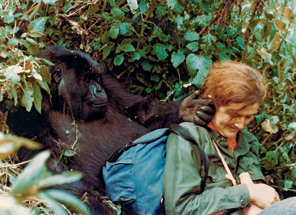 7-dajan-fossi-vedushhij-specialist-po-issledovaniyu-gornyx-gorill-v-ruande-1980-e