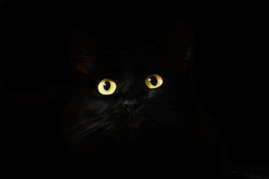 black-2944820_1280
