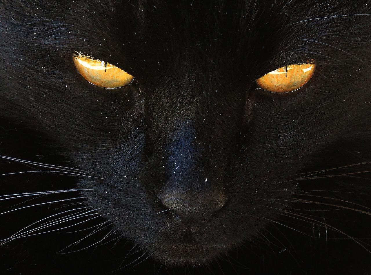pravá čierna mačička mladá tesnej mačička galérie