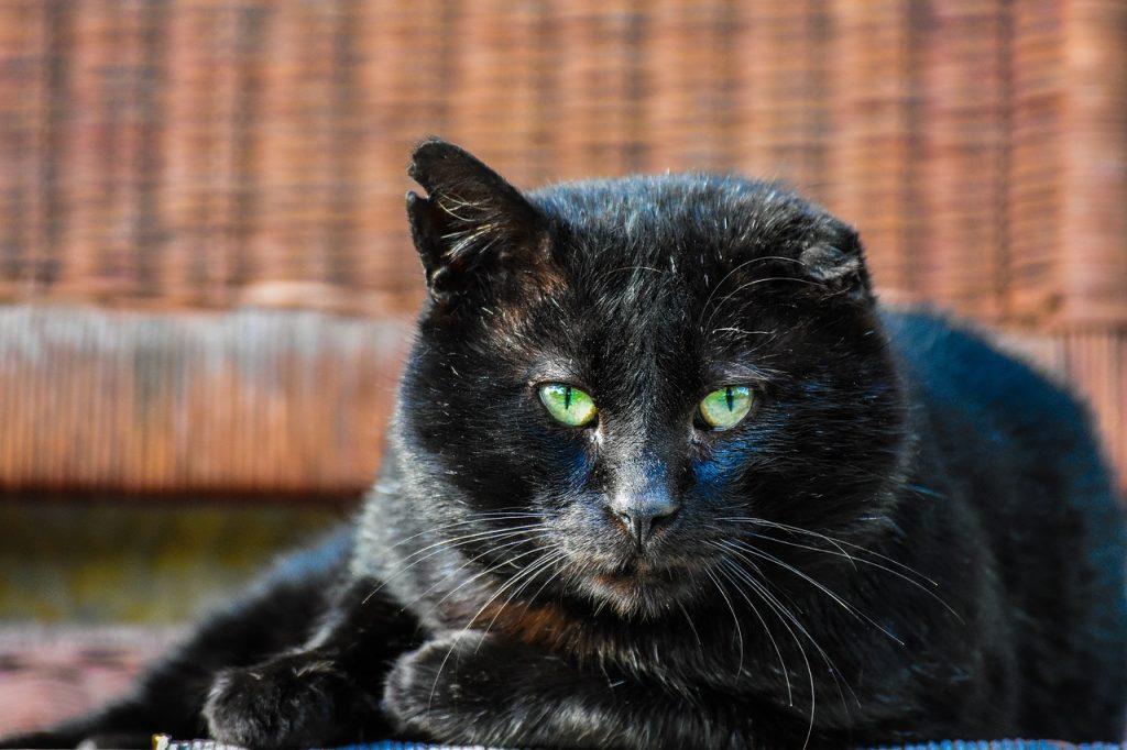 cat-2993409_1280