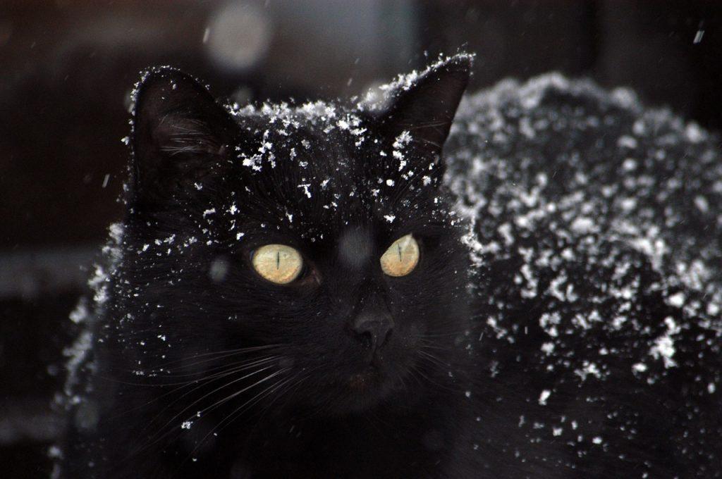 pekná čierna mačička dospievajúce dievča obrázok