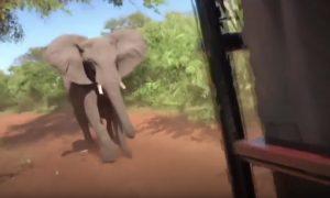 útok slona