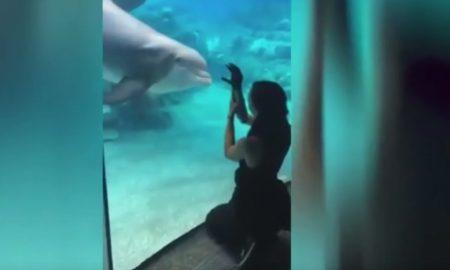 zvedavé delfíny