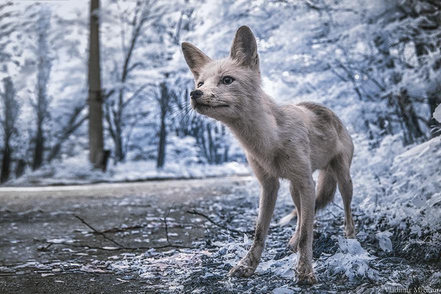infracerveny_cernobyl_1