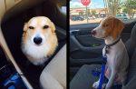 10 vtipných psíkov, ktoré si uvedomili, že nejdú do parku, ale k veterinárovi
