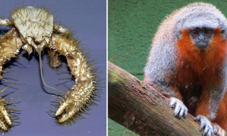 10 nedávno objavených zvierat
