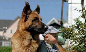 deti a zvieratá